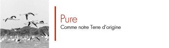 PURE-FR-1